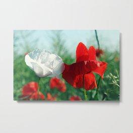 White Poppy and Red Poppy Metal Print