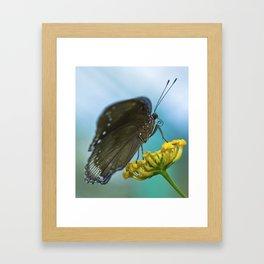 Butterfly on a Flower Framed Art Print