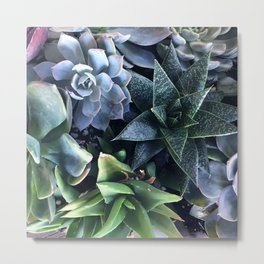 Contemporary, Sophisticated Succulents Metal Print
