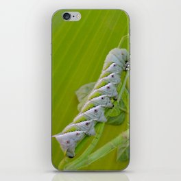 Tomato Horn Worm iPhone Skin