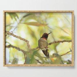 Sweet Hummingbird - Photography Serving Tray