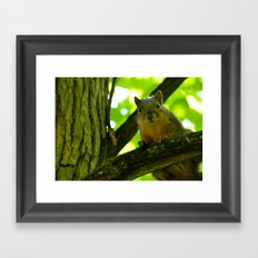 Squirrels are photogenic. Framed Art Print