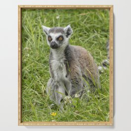 Beautiful ring-tailed lemur in the grass Serving Tray