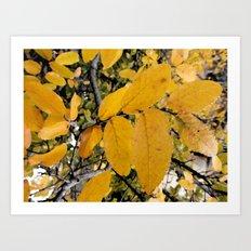 Yellow Leaves of Autumn Art Print