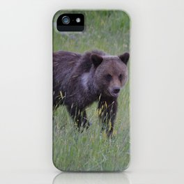 Grizzly cub learns to hunt iPhone Case