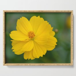Coreopsis 2 Serving Tray