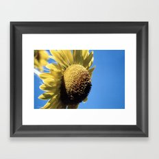 Bulging Sunflower Framed Art Print