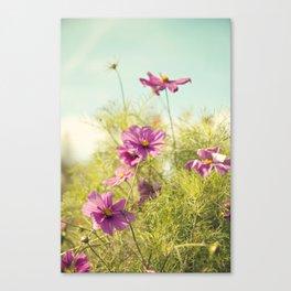 summer cosmos Canvas Print