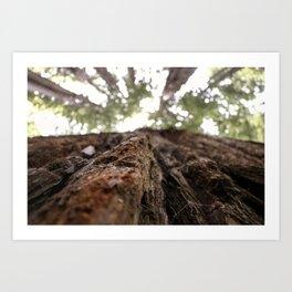 Redwoods- Bark Art Print