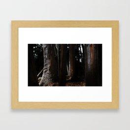 Tree Trunks (color) Framed Art Print