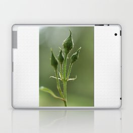 New Rose Unbloomed Laptop & iPad Skin