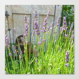 Blooming Garden Lavender Canvas Print