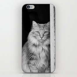 Doorway Cat 2 iPhone Skin
