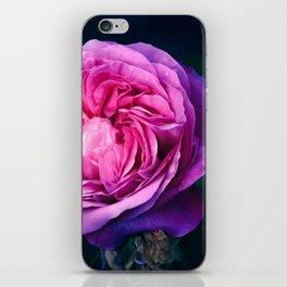 A Single Rose iPhone Skin