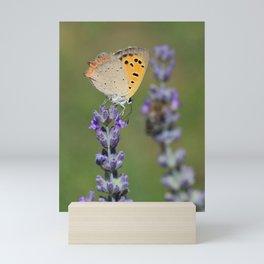 Butterfly On Lavender Mini Art Print
