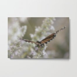 Monarch Butterfly XVI Metal Print