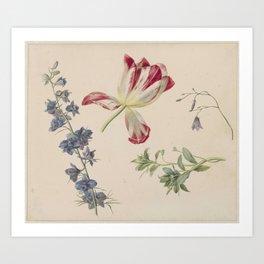 Flower Studies, Albertus Jonas Brandt, 1798 - 1821 Art Print