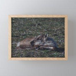 Baby Caribou Framed Mini Art Print