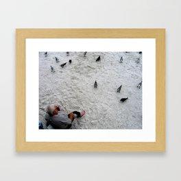 Feed the Birds - St. Pete Beach, Florida Framed Art Print