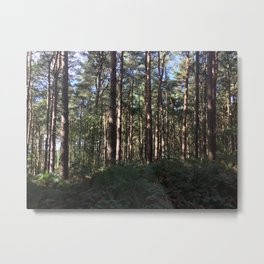 Trees Over Ferns. Rushmere Country Park, Bedfordshire UK Metal Print