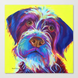 Wirehaired Griffon or Labradoodle Canvas Print