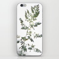 grace iPhone & iPod Skins featuring GRACE by Teresa Chipperfield Studios
