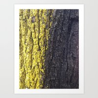 Abstracts in Nature Series -- Maple Bark Art Print