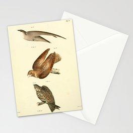 027 Chimney Swallow (Chaetura pelasgia) Whippoorwill (Caprimulgus vociferus) Nighthawk (Chordeiles americanus)13 Stationery Cards