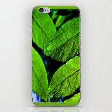 recto verso iPhone & iPod Skin