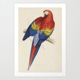 Vintage Illustration of a Macaw Parrot (1832) Art Print