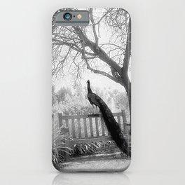 Bench Peacock iPhone Case