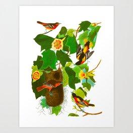 Baltimore Oriole Bird Art Print