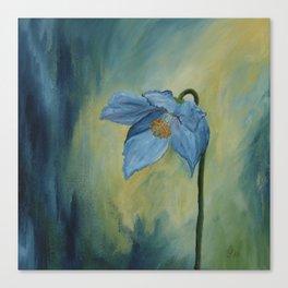 A Blue Poppy Canvas Print
