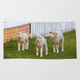 3 Little Lambs Beach Towel