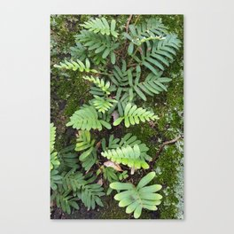 Moss and Fern Canvas Print