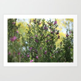 Texas Ranger Bush Against Palo Brea Bushes Art Print