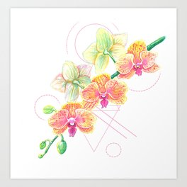 Phalaenopsis Orchid Watercolor Art Print