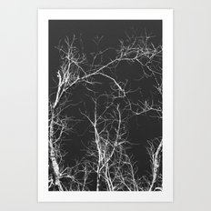 Branches and Sky Art Print