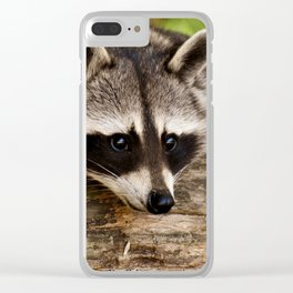 Adorable Raccoon Photo Clear iPhone Case