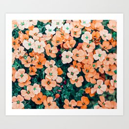 Floral Bliss #photography #nature Art Print