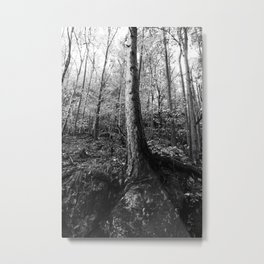 Forest black and white 8 Metal Print