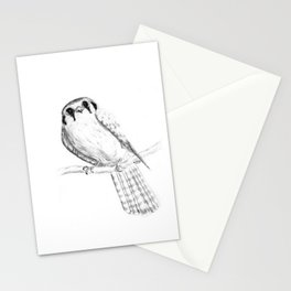 American Kestrel pencil front on Stationery Cards