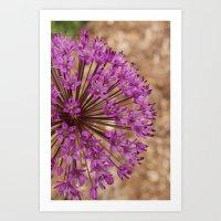 Single Purple Allium Art Print