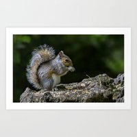 squirrel Art Prints featuring Squirrel by Fine Art by Rina