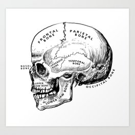Anatomy of a Skull Art Print