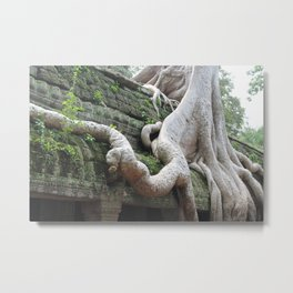 Roots Gone Wild, Cambodia Metal Print