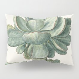 Herman Saftleven - Succulent (probably a Cotyledon orbiculata) - 1683 Pillow Sham