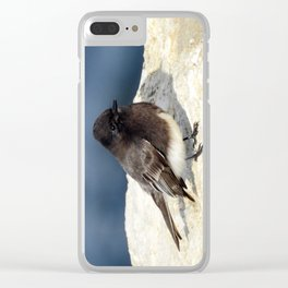 Black Phoebe Clear iPhone Case