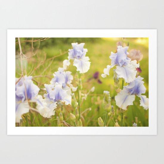Dreamy Iris Art Print