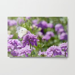 Butterfly and purple flowers Metal Print